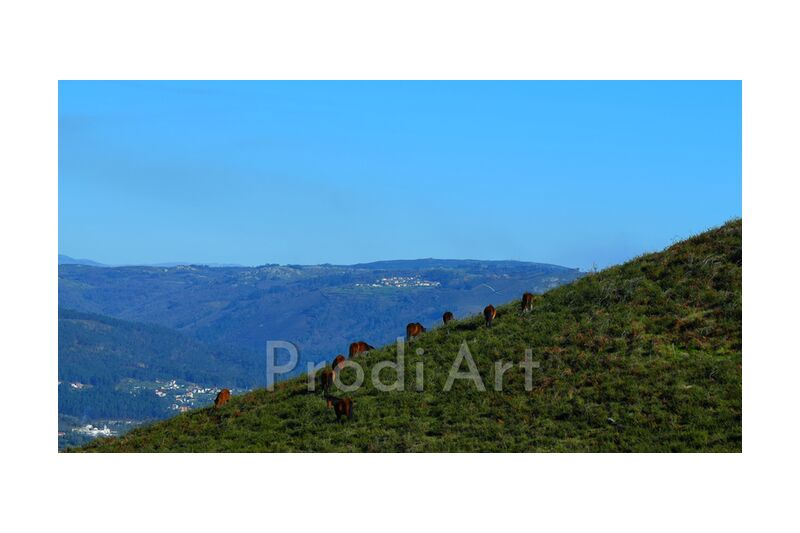 chevaux sauvages from ivephotography, Prodi Art, horses, nature