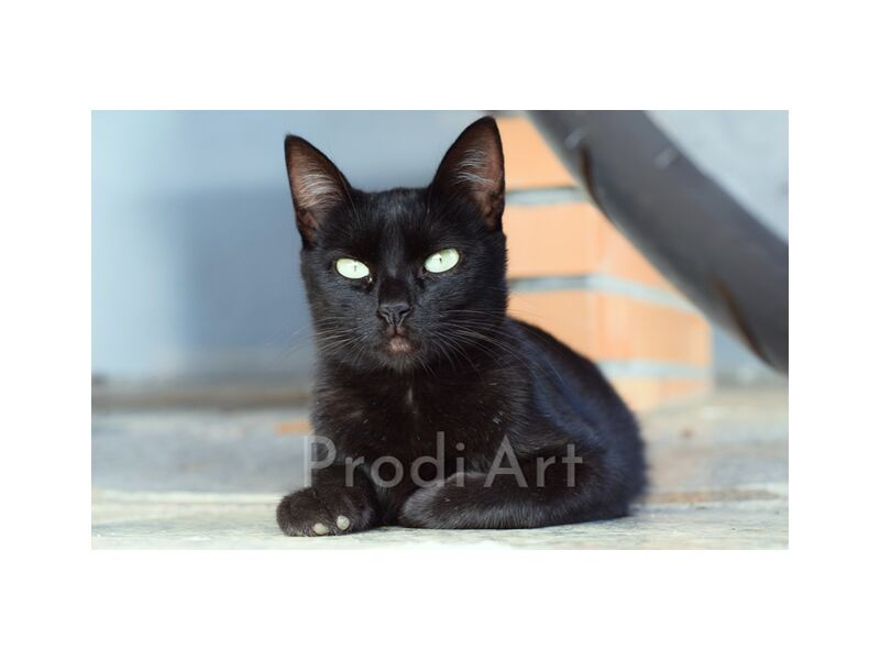 chat from ivephotography, Prodi Art, Cat