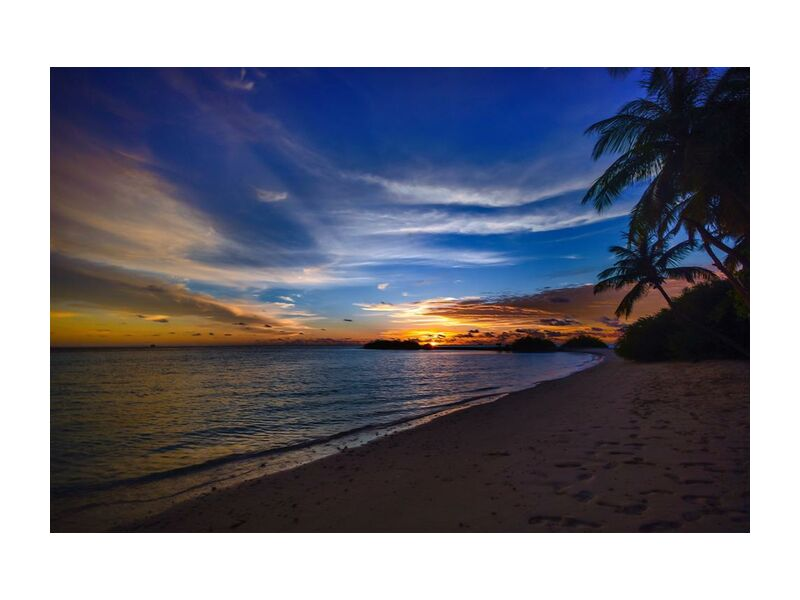 Tropical from Aliss ART, Prodi Art, footsteps, water, tropical, trees, tranquil, sunset, sunrise, sky, silhouette, seashore, sea, scenic, sand, silent, peaceful, palm trees, ocean, nature, idyllic, clouds, calm, beach