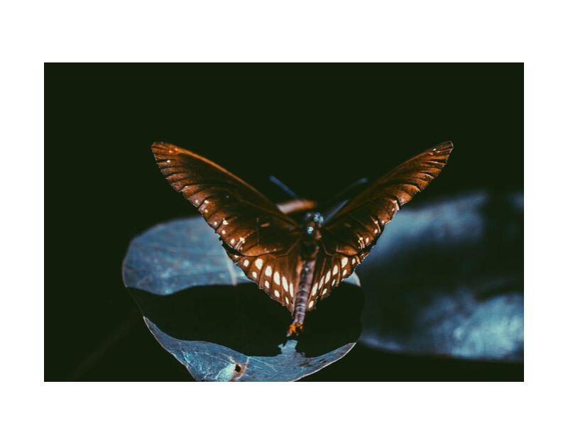 مظلم from Aliss ART, Prodi Art, Srilanka, moth, monarch, lepidoptera, wings, macro, insect, dark, close-up, butterfly