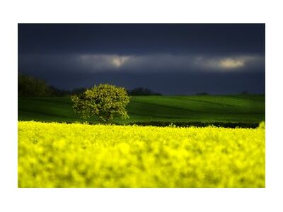 The yellow field from Pierre Gaultier, Prodi Art, Art photography, Art print, Standard frame sizes, Prodi Art