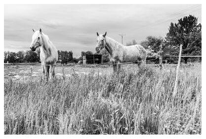 The Horses from Caro Li, Prodi Art, Art photography, Giclée Art print, Prodi Art