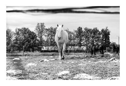 Le cheval from Caro Li, Prodi Art, Art photography, Giclée Art print, Prodi Art