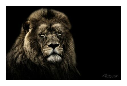 The King of the Savannah from Mayanoff Photography, Prodi Art, Art photography, Giclée Art print, Prodi Art