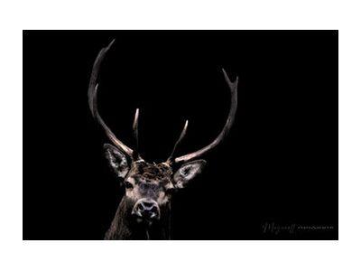 The woodland ghost from Mayanoff Photography, Prodi Art, Art photography, Giclée Art print, Standard frame sizes, Prodi Art
