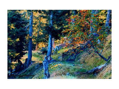 The forest from Mayanoff Photography, Prodi Art, Art photography, Giclée Art print, Standard frame sizes, Prodi Art