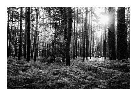 The forest from Mayanoff Photography, Prodi Art, Art photography, Giclée Art print, Prodi Art