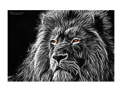 Feline gaze from Mayanoff Photography, Prodi Art, Art photography, Giclée Art print, Standard frame sizes, Prodi Art