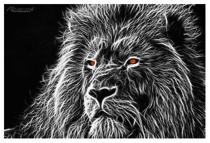 Feline gaze from Mayanoff Photography, Prodi Art, Art photography, Giclée Art print, Prodi Art