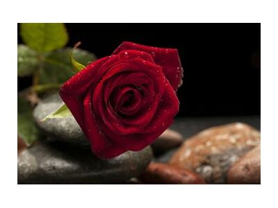 The Red Rose from Pierre Gaultier, Prodi Art, Art photography, Giclée Art print, Standard frame sizes, Prodi Art