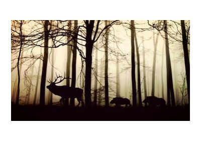 Silhouette of the forest from Pierre Gaultier, Prodi Art, Art photography, Giclée Art print, Standard frame sizes, Prodi Art