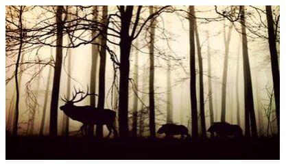 Silhouette of the forest from Pierre Gaultier, Prodi Art, Art photography, Art print, Prodi Art