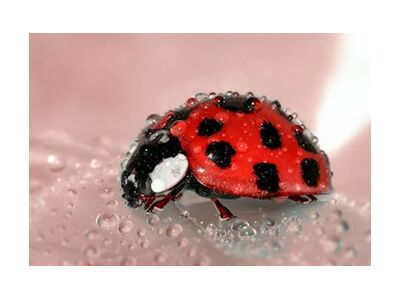 Red Ladybird from Pierre Gaultier, Prodi Art, Art photography, Giclée Art print, Standard frame sizes, Prodi Art