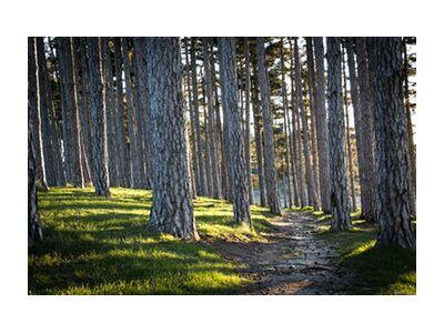 Le chemin de Caro Li, Prodi Art, Photographie d'art, Impression d'art, Tailles de cadre standard, Prodi Art