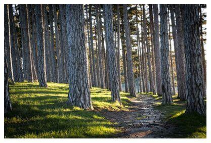 Le chemin from Caro Li, Prodi Art, Art photography, Giclée Art print, Prodi Art