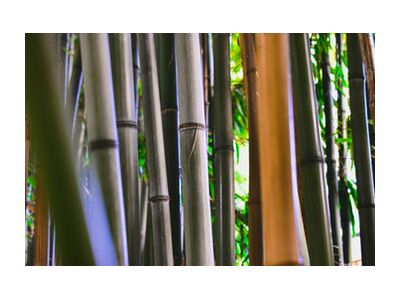Bambous from Loïse Raoult, VisionArt, Art photography, Art print, Standard frame sizes, Prodi Art