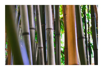 Bambous from Loïse Raoult, VisionArt, Art photography, Art print, Prodi Art
