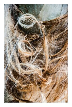 Enchevêtrement capillaire de Marie Guibouin, VisionArt, Photographie d'art, Impression d'art, Prodi Art