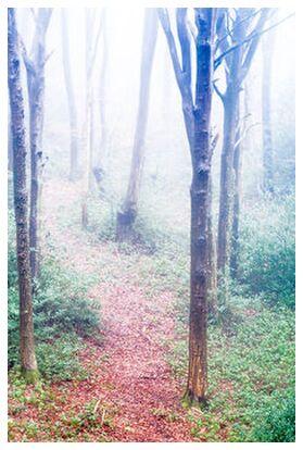 Dans les bois de Marie Guibouin, VisionArt, Photographie d'art, Impression d'art, Prodi Art
