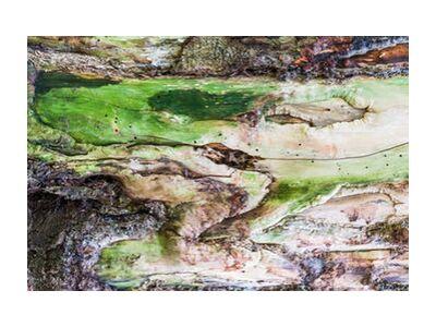 Le bois vert from Marie Guibouin, VisionArt, Art photography, Art print, Standard frame sizes, Prodi Art