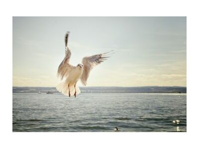The approach of the seagull from Pierre Gaultier, Prodi Art, Art photography, Giclée Art print, Standard frame sizes, Prodi Art
