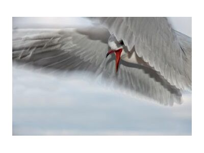 The gull race from Pierre Gaultier, Prodi Art, Art photography, Giclée Art print, Standard frame sizes, Prodi Art