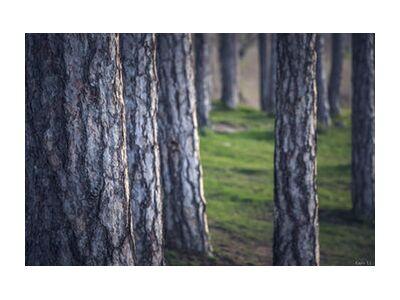 Trees de Caro Li, Prodi Art, Photographie d'art, Impression d'art, Tailles de cadre standard, Prodi Art