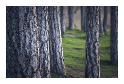 Trees from Caro Li, Prodi Art, Art photography, Giclée Art print, Prodi Art