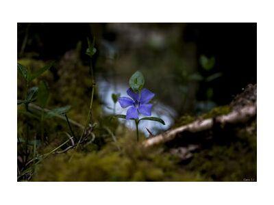 Violette de Caro Li, Prodi Art, Photographie d'art, Impression d'art, Tailles de cadre standard, Prodi Art