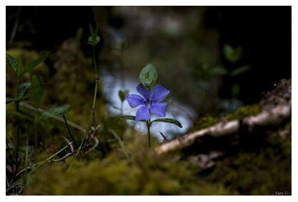 Violette from Caro Li, Prodi Art, Art photography, Giclée Art print, Prodi Art