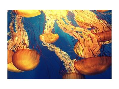 Jellyfish from the Sea from Pierre Gaultier, Prodi Art, Art photography, Giclée Art print, Standard frame sizes, Prodi Art