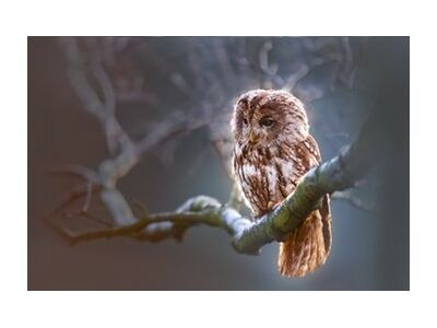 The owl's wait from Pierre Gaultier, Prodi Art, Art photography, Giclée Art print, Standard frame sizes, Prodi Art