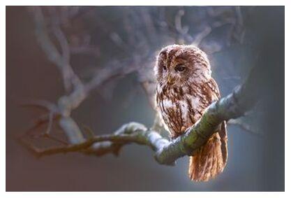 The owl's wait from Pierre Gaultier, Prodi Art, Art photography, Art print, Prodi Art