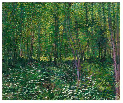 Trees and undergrowth - VINCEN... from AUX BEAUX-ARTS, Prodi Art, Art photography, Giclée Art print, Prodi Art
