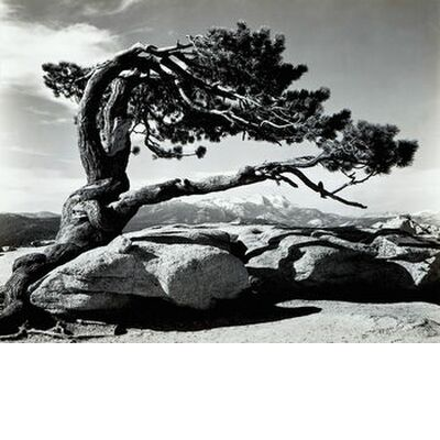 Jeffrey Pine, Sentinel Dome - ANSEL ADAMS 1940 from Aux Beaux-Arts, Prodi Art, Art photography, Art print, Standard frame sizes, Prodi Art