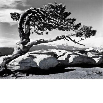 Jeffrey Pine, Sentinel Dome - ... from AUX BEAUX-ARTS, Prodi Art, Art photography, Giclée Art print, Standard frame sizes, Prodi Art