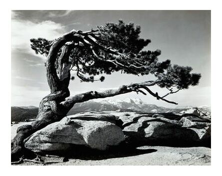 Jeffrey Pine, Sentinel Dome - ... from AUX BEAUX-ARTS, Prodi Art, Art photography, Giclée Art print, Prodi Art