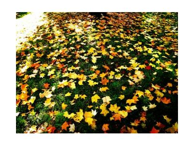 Feuilles d'automne de JuJuPhotographies, VisionArt, Photographie d'art, Impression d'art, Tailles de cadre standard, Prodi Art