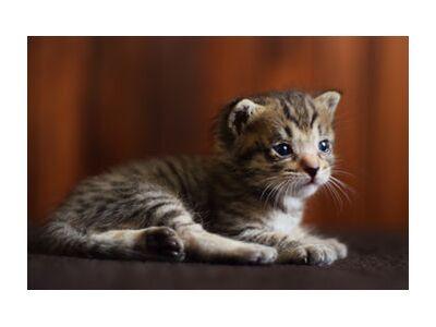 petit chaton from ivephotography, VisionArt, Art photography, Art print, Standard frame sizes, Prodi Art