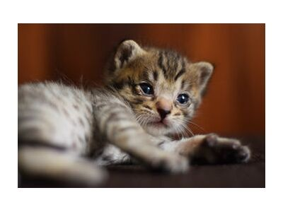 petit chaton from ivephotography, VisionArt, Art photography, Art print, Standard frame sizes, Prodi Art