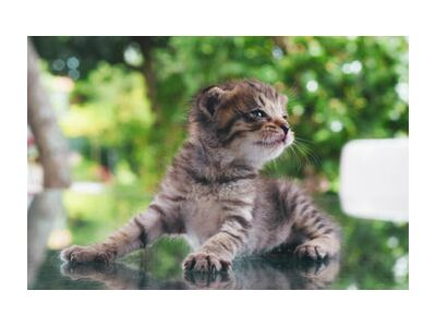 petit chaton from ivephotography, Prodi Art, Art photography, Art print, Standard frame sizes, Prodi Art