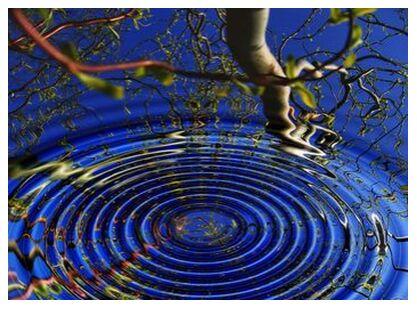 Reflection of trees from Aliss ART, Prodi Art, Art photography, Giclée Art print, Prodi Art