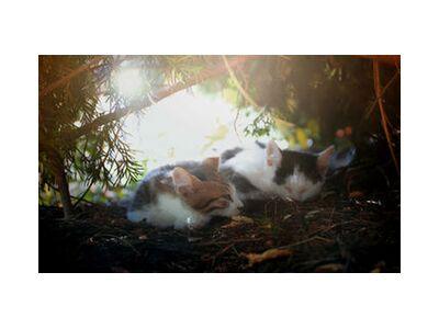 Chats qu dorment from Cyril Jourdan, VisionArt, Art photography, Art print, Standard frame sizes, Prodi Art