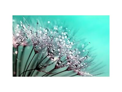 Morning dew from Aliss ART, Prodi Art, Art photography, Giclée Art print, Standard frame sizes, Prodi Art